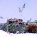 (海水魚 無脊椎)生餌 海洋性イサザアミ(3g)