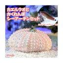 (海水魚)スポットテールブレニー+隠れんぼシーアーチン(1セット) 北海道・九州・沖縄航空便要保温