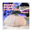 (海水魚)ロウソクギンポ+隠れんぼシーアーチン(1セット) 北海道・九州航空便要保温