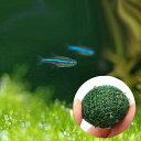 (熱帯魚 水草)グリーンネオンテトラ(50匹) + ウィローモス ミックス ボール 3個