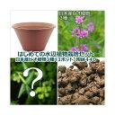 (ビオトープ)(水草)はじめての水辺植物栽培セット 日本産ビオ植物3種(3ポット) 陶鉢440 本州四国限定