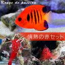 (海水魚)情熱の赤セット(1セット) 北海道航空便要保温