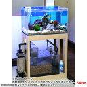 同梱不可・中型便手数料 (海水魚)オーバーフロー水槽セット クロミス60 海水スターターセット 50Hz(東日本用) 本州・四国限定 才数170