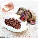 (海水魚 貝殻)シェルコレクション シャコガイ ミックス Mサイズ(3枚)(形状お任せ) オカヤドカリ食器