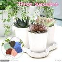 【まとめ割】(観)Three succulent 3種の多肉植物セット 【あす楽対応_関東】