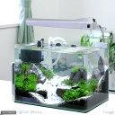(水草 熱帯魚)雪解け 〜いのち芽吹くとき〜 40cm レイアウト水槽セット(無農薬) 本州・四国限定