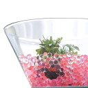 (水草)私の小さなアクアリウム ~ザ・ボンサイ2個とセット Gemini3~ 本州・四国限定