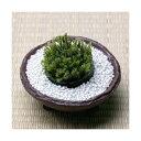 (観葉/苔)私の小さな苔盆栽 〜わびさび益子焼 赤楽と白砂利〜 本州・四国限定