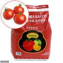 (観葉植物)エコバッグで育てる 簡単トマト栽培(ぜいたくトマト)(1セット) PVP 家庭菜園