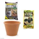 花ごころ オリーブの土+オリーブの肥料+デローマ バッサム 直径31cm×23cm セット お一人様5点限り 関東当日便