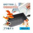 自宅でできる 本格金魚すくい プラ箱60 金魚袋+ポイ付き 用品のみ お祭り 縁日 関東当日便