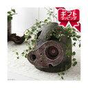 (観葉植物)観葉ギフト ジブリプランター 天空の城ラピュタ ロボット兵の思い ワイヤープランツ仕立て 植え込み完成品