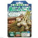 (観葉)野菜球根 にんにく 島にんにく 100g詰(1袋) 家庭菜園