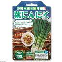 (観葉)野菜球根 にんにく 葉にんにく 100g詰(1袋) 家庭菜園