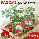 RoomClip商品情報 - (観葉植物)アウトレット品 カゴメ 野菜苗 トマト GABAリッチトマト 3号(1ポット) 家庭菜園