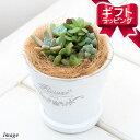 (観葉植物)観葉ギフト 私のオアシス 多肉6種寄せ植え フレグランドラウンドポットXS(1鉢) 受け皿付き
