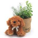 (観葉植物)観葉ギフト ハーブの寄せ植え(品種おまかせ) アニマルバスケットセット(ドッグ ココア)(1セット)