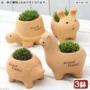 (盆栽)苔盆栽 アニマルテラコッタ ミニ 鉢おまかせ(3鉢)