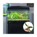 (水草 熱帯魚)おまかせ水上葉 レイアウトセット 60cm水槽用 8種(無農薬)(1パック) おまかせブセファランドラ付き 北海道航空便要保温