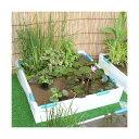 (ビオトープ/睡蓮)池でビオトープ レイアウトセット(W90×D90×H18.5cm) ホワイト 本州・四国限定