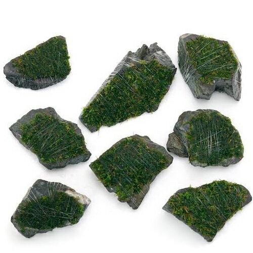 (水草)巻きたて 南米ウィローモス 風山石 ミニサイズ(約5cm)(無農薬)(3個) 北海道航空便要保温