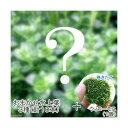 (水草 熱帯魚)おまかせ水上葉 3種セット(計10本) + 巻きたて ウィローモスボール(無農薬)(1個) 北海道航空便要保温