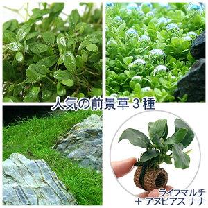 (水草)人気の前景草3種セット+ライフマルチ(茶)