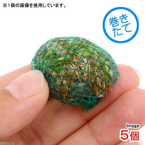 (水草)巻きたて ミックスボール(ヘアショー+グロッソスティグマ)(5個)