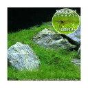 (エビ 水草)ミナミヌマエビ10匹付き ヘアーグラス ショート(水上葉)(無農薬)(3束分) 北海道航空便要保温