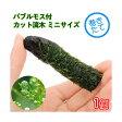 (水草)巻きたて バブルモス付 カット流木 ミニサイズ(5〜7cm)(無農薬)(1本) 北海道航空便要保温