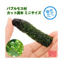 (水草)巻きたて バブルモス付 カット流木 ミニサイズ(8cm以下)(無農薬)(1本)