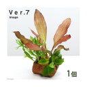 (水草)Plants Arrangement ザ ボンサイ Ver.7(1個) 北海道航空便要保温