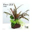 (水草)Plants Arrangement ザ ボンサイ Ver.23(1個)