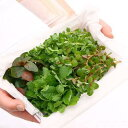 (水草)初心者向けおまかせ水草詰め合わせパック 4種(水上葉)(無農薬)(1パック) 熱帯魚