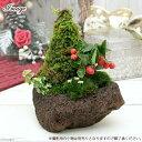 (観葉)苔盆栽 ツリー 溶岩石鉢植え (1鉢)