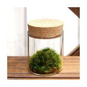 (観葉植物)苔Terrarium ヤマゴケ コルクボトル ミニ 説明書付