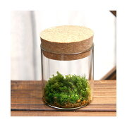 (観葉植物)苔Terrarium 苔3種セット コルクボトル ミニ 説明書付 テラリウムキット 本州・四国限定