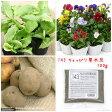 No.143 ちょっぴり草木灰の肥料 100g 関東当日便