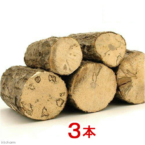 選別もれ 産卵木(径5〜15cm) 3本 関東当日便