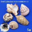 (海水魚 貝殻)やどかりの貝殻 Mサイズ おまかせ(殻口20〜30mm)(5個入り)(形状おまかせ)