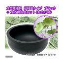 (ビオトープ/蓮)大型睡蓮鉢 超軽量タイプ(約1kg)ブラック+大酒錦育成セット+おまけ 同梱不可
