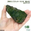 (水草)巻きたて ウィローモス 風山石 SSサイズ(8cm以下)(無農薬)(5個)