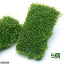 (水草)南米ウィローモスマット(無農薬)(5個) 北海道航空便要保温