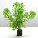 (水草)メダカ・金魚藻 お一人様3点限り マルチリング・ブラック(黒) カボンバ(3個)+1個