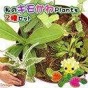 虫を捕食する脅威の植物!一風変わったインテリアにも!(食虫植物)私のキモかわPlants 2種セット 4号(1鉢)