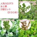 (水草)人気のロタラ 水上葉3種セット(無農薬)(計30本) 北海道航空便要保温