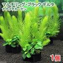 (水草 熱帯魚)マルチリング・ブラック(黒) デルタ ナナプチカーテン(水上葉)(1個)