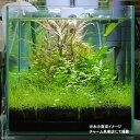 (水草)国産ヘアーグラスマット(水上葉)(約25cm×25cm)(無農薬)(2シート分) 北海道航空便要保温
