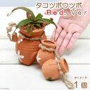 虫を捕食する脅威の植物!一風変わったインテリアにも!(食虫植物)タコツボウツボ Red.Ver(1個)