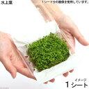 (水草)ニューラージパールグラス(水上葉)(無農薬)(1シート分)